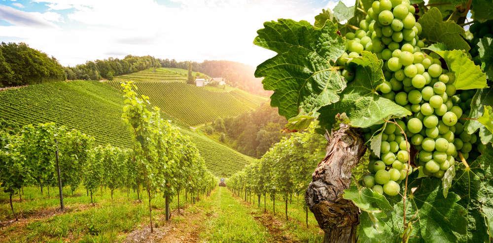 La maquinaria vinícola siempre en constante evolución